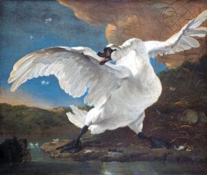 heeft een politieke allegorische interpretatie gekregen doordat de zwaan is aangeduid als de raadpensionaris Johan de Witt, die Holland beschermt tegen de vijand.